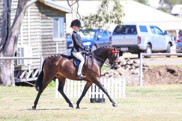 Sandarah Evening Star Owner and Rider Willow Scotson  Champion Medium Pony and Runner Up Childs Medium Pony