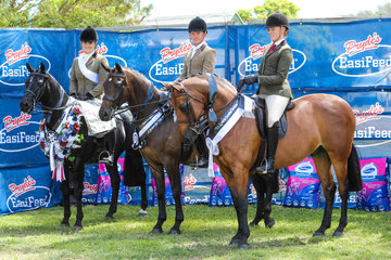Winners of the Prydes EQ HOTY small Hunter galloway