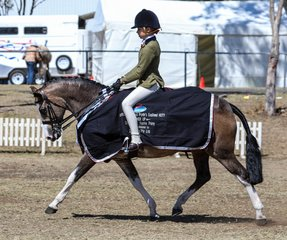 Owendale Butter Schnapps trotting a victory lap as runner up childs large hunter pony