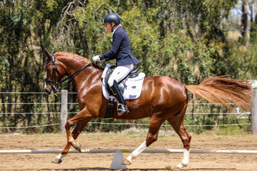 Jane Carcary Winner of both Advanced tests on Regal Don Rico and champion advanced pony