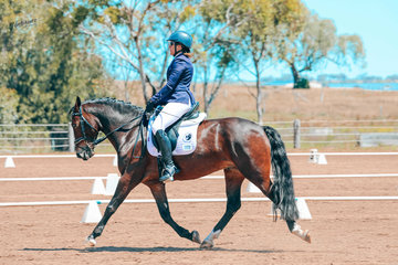 Melissa Forrest and Salient Park Ruben 2nd Prelim 1b, 6th 1, 1st Novice 2c and 5th 2b