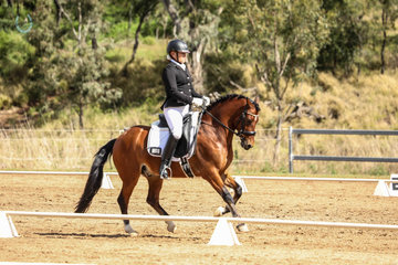 Westbury The Pulitzer ridden and owned by Ruth White, 2nd place in Novice Championship