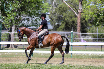 Competing in the OTT spectacular Foxstreet 7 years old finished racing in march Was exhibited by Paul Fenton Owned By Michelle Gaitskell