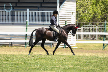Langtree Shiraz ridden by Shona Clarke in the Adults Galloway class