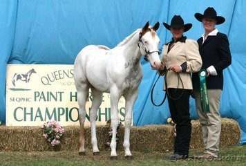 Reserve Champion Weanling Colt, Touchstone, shown by Leanne Bartlett for owner Susan Frost.