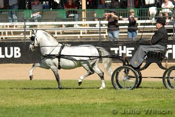 Alan Brown drove 'Keral Izon' exhibited by AP and KA Brown from Portland in NSW to claim the Non Hackney Harness Pony Championship.