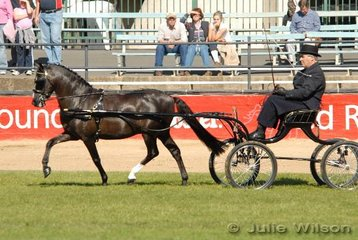 Tom Lenihan from Lancefield in Queensland  drove P & T Lenihan's liver chestnut stallion, 'Mariposa Tradesman' to take fourth place in the  Non Hackney Harness Pony Turnout class.