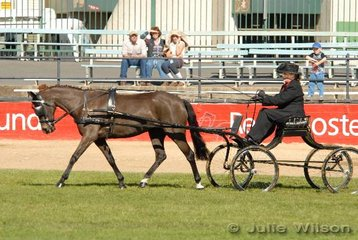 Renee Barnes from Logan in Queensland drove her own 'Jurah Tranquility' in the Turnout class for Non Hackney Ponies