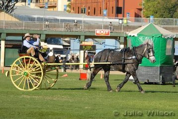 Trevor Kohler drove Gary Appleby's (in passanger seat) Percheron, 'Beauty Rosie Bell' to third place in the Medium/Heavy Horse Turnout class.