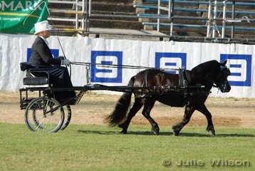 Jane Hampson drove 'Rosebrook Lodge Ebony' to win the Open Shetland/Miniature Horse/Miniature Pony Mare or Gelding in Harness class. Exhibited by CR Smallmon and JE Hampson from Mururundi in NSW.