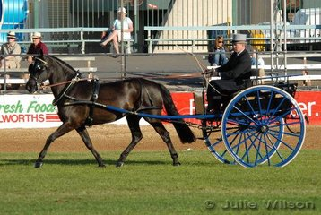 Ryan Ward from Singleton in NSW drove his 'Peace' to win the Novice Non Hackney Light Horse in Harness class.