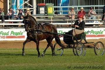 Kylie Parker drove the Keir Family's outstanding 'Canberra Park Silhouette' to claim the Open Non Hackney Light Horse In Harness class and went on to be declared Champion Light Harness Non Hackney Horse and Champion Light Harness Turnout.