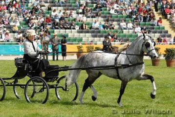 Kerry Barlow drove  her own and brother Warren's,  Riverlodge Vanity's Hero to win the Viceroy Turnout for Ponies 13hh and not over 14hands.