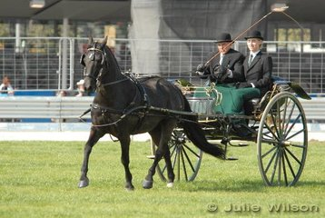 Winner of the Jinker Turnout over 14hh, Acheron Starlight Express exhibited by T and T Coster.