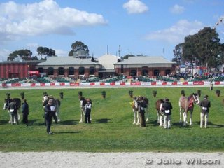 Good entries in the Clydesdale filly class. Clydesdales are the only breed classes at this years September Royal Show, with all other breed classes being offered at the Summer Royal at Werribee Park. This includes the Australian Stock Horses who have had classes at both Royals for the past few years.