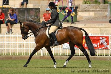 Adele Lubcke riding Wedgewood Forrest was placed fifth in the Hack over 16hh.