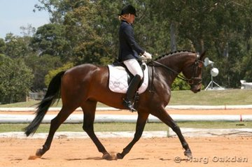 Claire Wallace & the Hannoverian mare,Dixon's Glamour (Gymnastic Star x UQ Garland), striding out in the Preliminary 1.2 Division B.