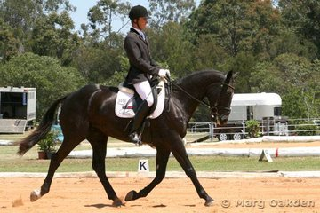 The Warmblood gelding, Fairbanks Faberge (Faust Z x Fairbanks Gina), & Shane Davidson up the centreline in the Preliminary