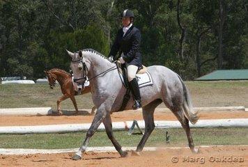The handsome grey Warmblood gelding, Perioso (Purioso x Keepsake), & Jane Blomfield contesting the Preliminary 1.2