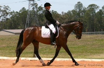 Sam Ruedegger & the Holsteiner mare, Vivace Caprice (Casanova x APH Frauenroc), cover the ground in the Preliminary 1.4 Division B.