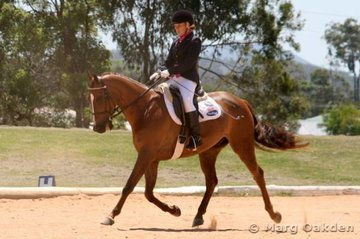A moment of suspension for Jessica Chan & the Riding Pony/Thoroughbred gelding, Willowcroft Hollywood (Willocroft Vagabond x Harley), in the Elementary 3.2.
