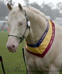 Supreme White Horse Exhibit was the cremello stallion Nights Of Gold owned by the Owens Family