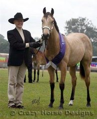 Best Yearling Buckskin exhibit was My Eagle Roc owned by Neva Craig