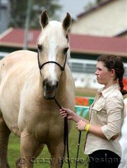 Pallano Intrepid shows his young handler the ropes in a Junior Handler class
