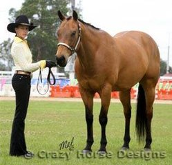 Rocs Mark Of Cain & Daphne Harrip had a very successful show competing in the buckskin classes on the Saturday morning