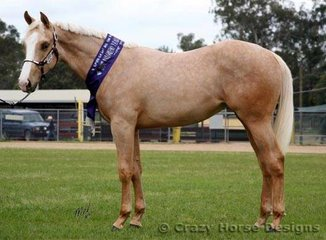 Sleepy Hollow Solitary Blonde owned by Kym Neate won Supreme Yearling Palomino Exhibit