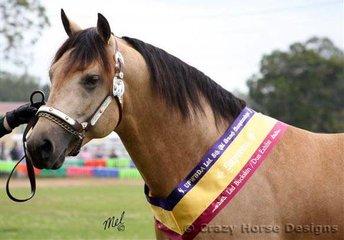 Supreme Led Buckskin/Dun Exhibit was the Quarter Horse stallion Mulaguna Fabbio owned by Tania Papasidero