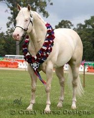 Supreme Led Exhibit of the Show... The lovely cremello stallion, Nights Of Gold, owned by the Owens Family
