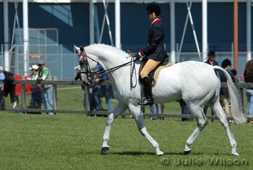 Adam Linardi from Hobart rode his 'Kosminsky' to win the Gent's Hack class and take second place in the Open Hack Over 16hh class.