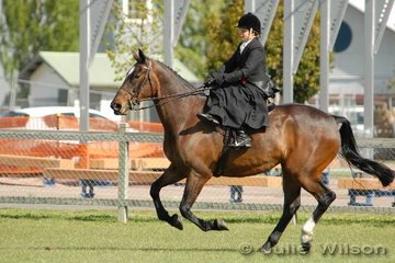 Karen Mitchell, at the gallop side saddle with her 'Ramirez' during the Novice Show Hunter Hack workout.
