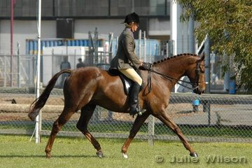 Andrew Way rode his 'Queen's Troubadour' in the Show Hunter Hack over 16hh class.