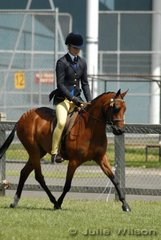 Bernadette Warren rode Julia Youl's 'Fairfield Cadenza' to take second place in the Open Pony 12.2-13hh class.