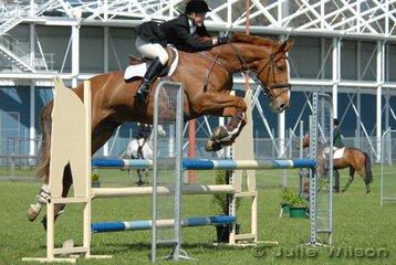 Launceston Royal Show (Fri 13th)   Events Gallery   Horse Deals
