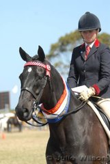 Tori Merigold from Little River claimed the District Hack Championship with her 'Night Fire'. The 13 year-old Thoroughbred by Chem won four million Australian dollors from a racing career in Hong Kong. Tori also took out the Pony Club/Riding Club Rider Championship aboard the typey speedster.
