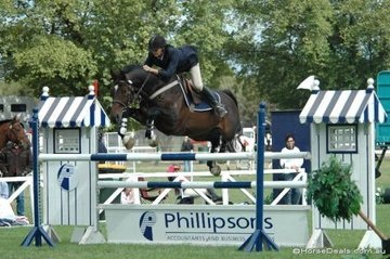 Well-known vet, Adam Johnson with his 'Woodleigh Don Juan' competing in the Saddleworld 1.35m One Round class.