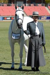 Barbara Davies waits for her class with the Andalusian mare,'Dutchess', exhibited by Barbara  and Tranquillo Lodge..