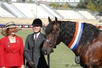 Champion Andalusian Stallion and Supreme Led Andalusian,'Faldanero'. Seen here with judge Flora Robson and Hilary Cassell. Exhibited by Cassell and Berrnee Andalusian Stud.