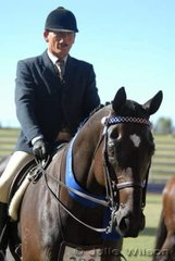Peter Richardson rode jJulie Butler and C & S Smith's 'Magestic' to win the Novice 16-16.2hh class.