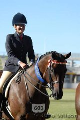 Maree Gibbons won the Novice Over 16.2hh class with her 'Expressions'.