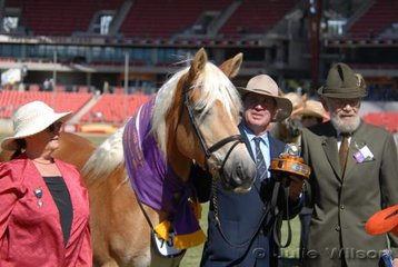 Best Haflinger Exhibit, the mare 'Bunderra Rose'  winner Haflinger Mare/Filly Any Age is seen here with L-R Judge, Jan Collins, Trevor McGilvray and presenter of The Luis Hupfau Consul General Perpetual Trophy., Barry Brown.