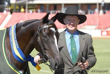 Graham Crow with his Reserve Champion Australian Stock Horse Mare/Fi,lly'Ivybank Simply Bobby' by Simply the Best.