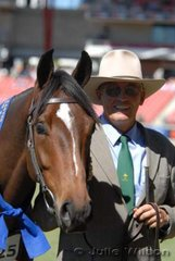 Richard Smallwood took out the Australian Stock Horse Gelding 3 Years class with his 'Roxby Park Dusty Nick' by Knights Nicholas.