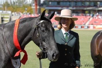 Libby Affleck was second in the 3Year Old Australian Stock Horse Gelding class with her 'Coolidowns Maximillian'.