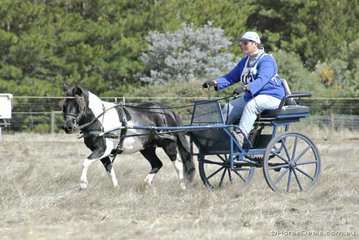 Glenys Wicks driving 'Darling Range Courtney' during the marathon.