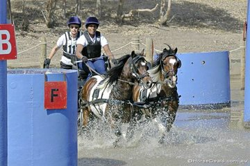 Rehka Devagnanam driving her pony pair 'Sam' & 'Bailey' through 'The Travel Professionals' water obstacle.