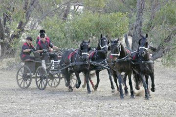 Jim Oversby driving his horse team through the 'Road Works' obstacle.